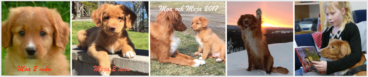 Skolhunden Moa & valpen Meja
